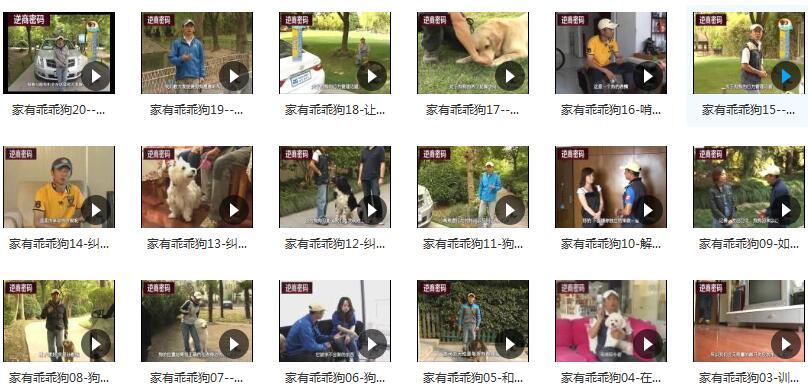 狗狗基本训练技巧之纠正不良行为视频教程目录